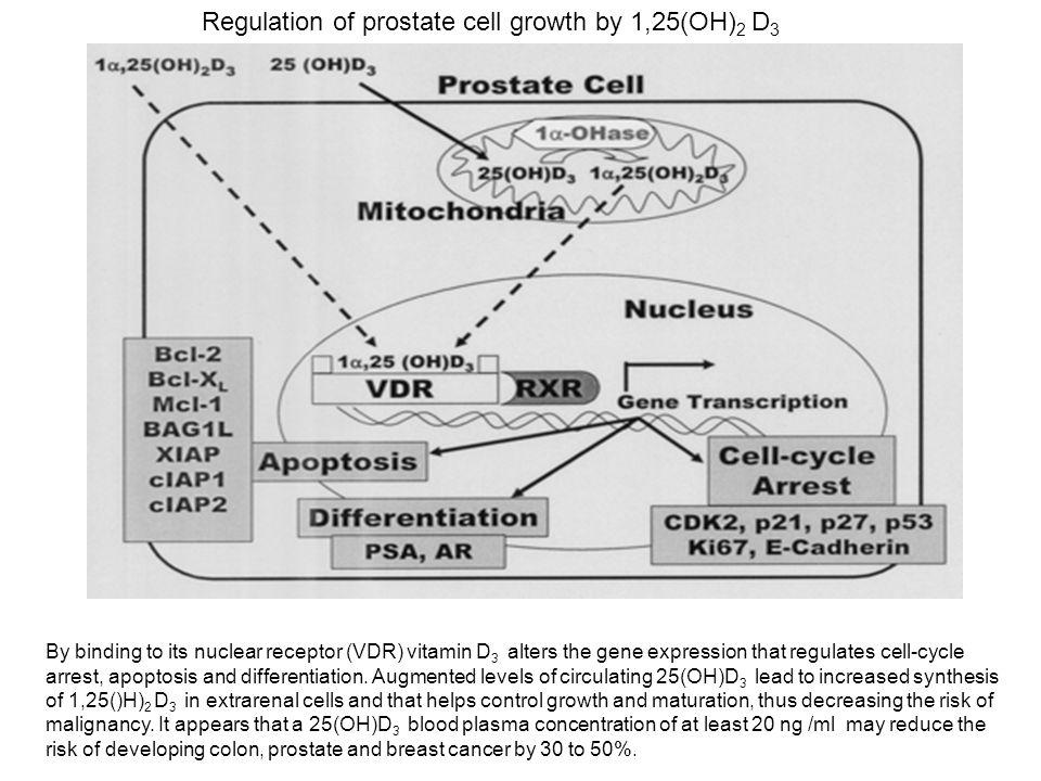 Regulation of prostate cell growth by 1,25(OH) 2 D 3 By binding to its nuclear receptor (VDR) vitamin D 3 alters the gene expression that regulates ce