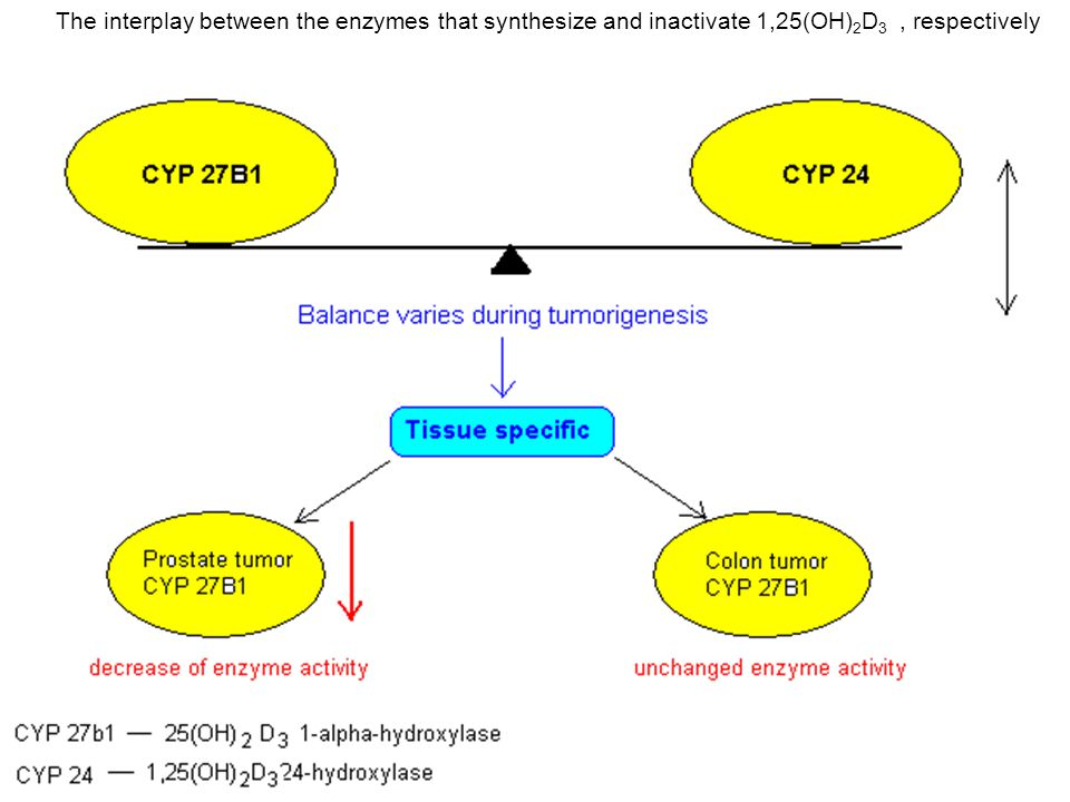 The interplay between the enzymes that synthesize and inactivate 1,25(OH) 2 D 3, respectively