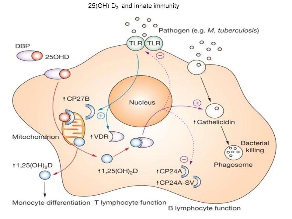 25(OH) D 3 and innate immunity
