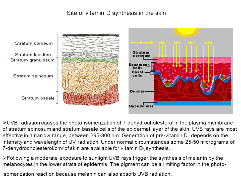 Site of vitamin D synthesis in the skin  UVB radiation causes the photo-isomerization of 7-dehydrocholesterol in the plasma membrane of stratum spino