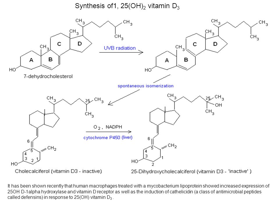 Synthesis of1, 25(OH) 2 vitamin D 3 It has been shown recently that human macrophages treated with a mycobacterium lipoprotein showed increased expres