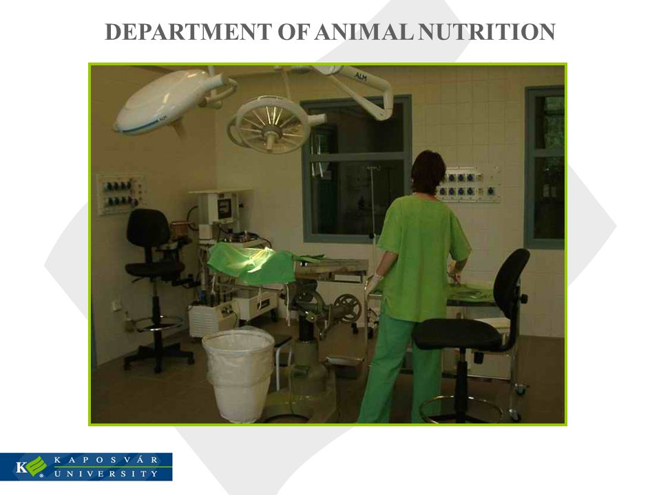 DEPARTMENT OF ANIMAL NUTRITION