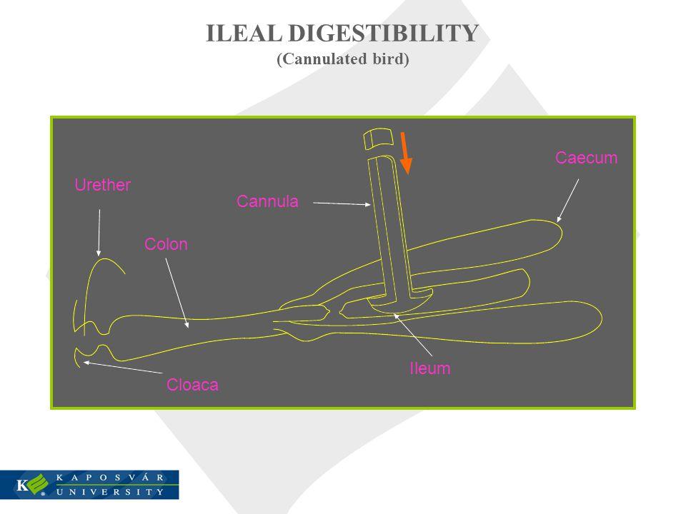 ILEAL DIGESTIBILITY (Cannulated bird) Urether Cannula Caecum Ileum Cloaca Colon