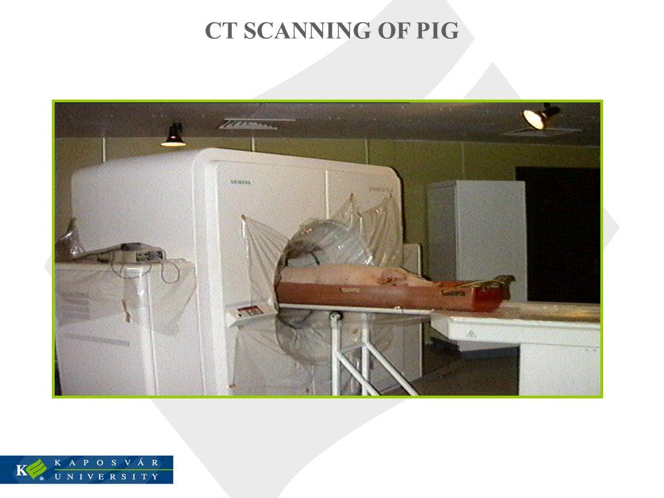 CT SCANNING OF PIG