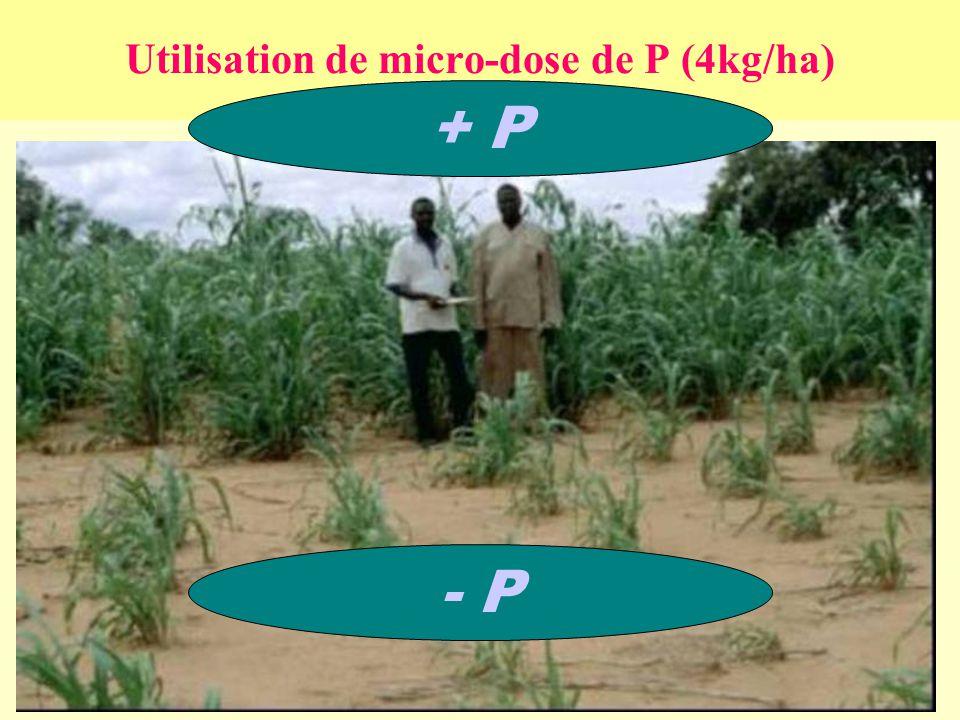 Utilisation de micro-dose de P (4kg/ha) - P + P