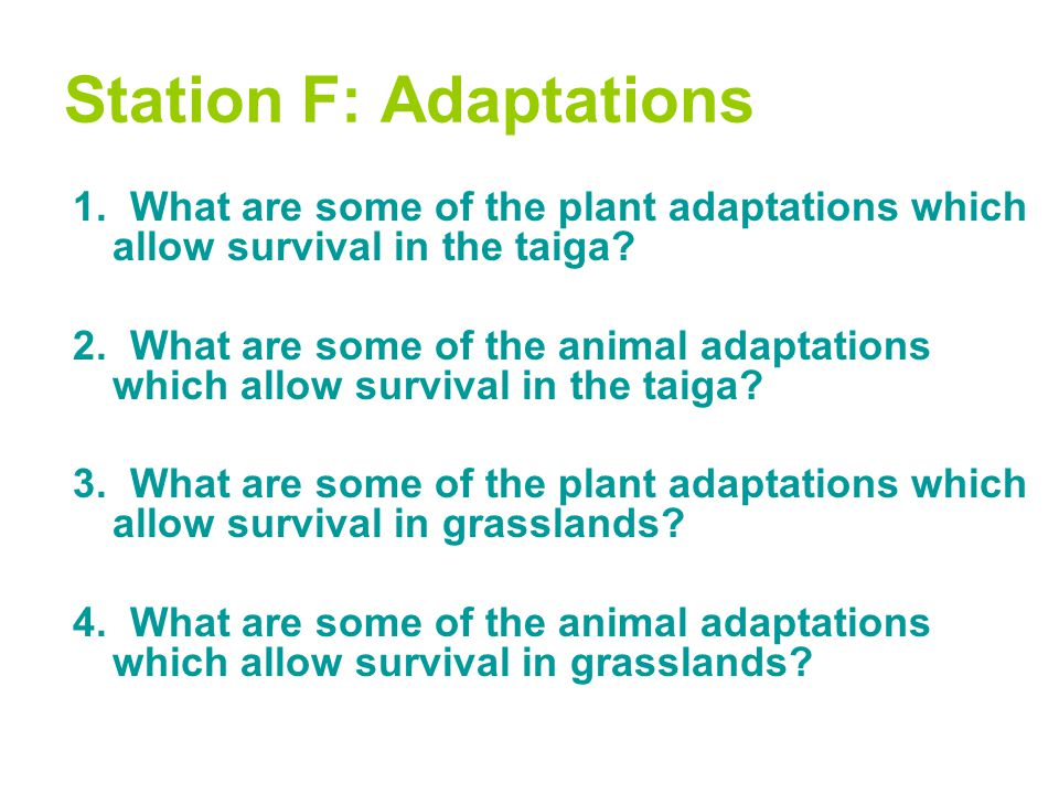 Station F: Adaptations 1. What are some of the plant adaptations which allow survival in the taiga? 2. What are some of the animal adaptations which a