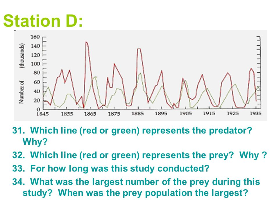 Station D: 31. Which line (red or green) represents the predator? Why? 32. Which line (red or green) represents the prey? Why ? 33. For how long was t