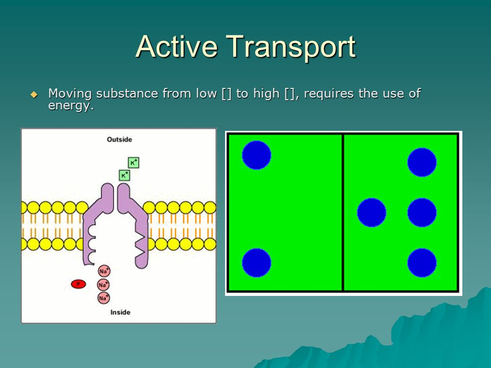 Active Transport  Moving substance from low [] to high [], requires the use of energy.