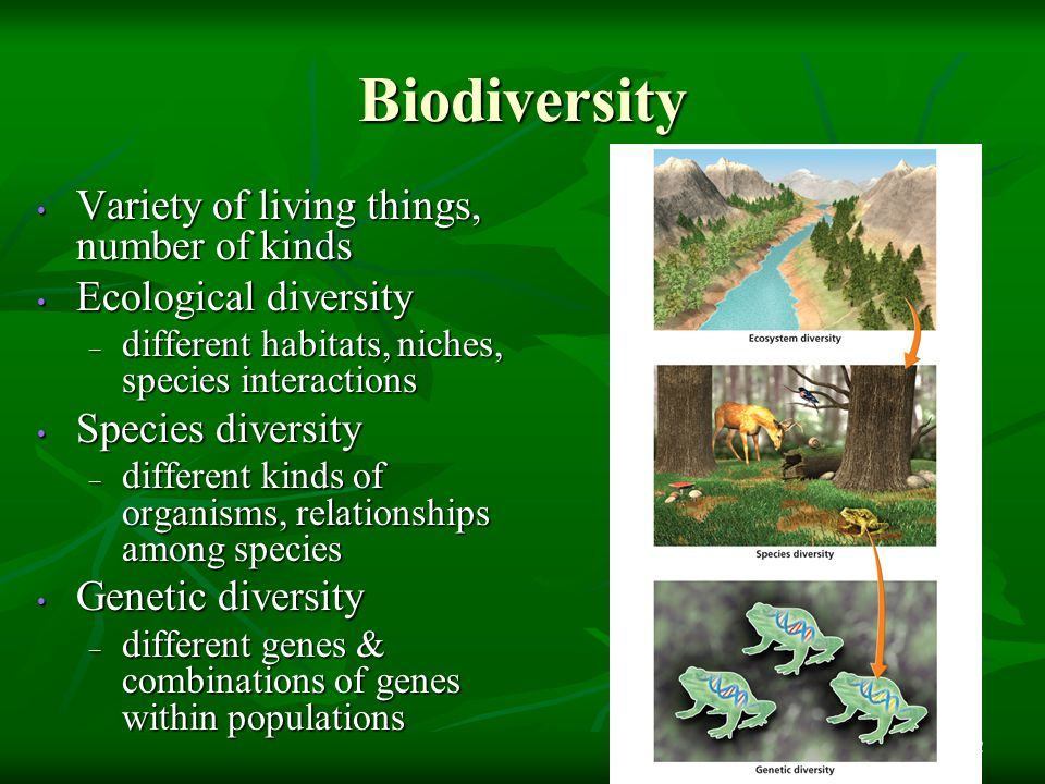Biodiversity 12 Variety of living things, number of kinds Variety of living things, number of kinds Ecological diversity Ecological diversity – different habitats, niches, species interactions Species diversity Species diversity – different kinds of organisms, relationships among species Genetic diversity Genetic diversity – different genes & combinations of genes within populations