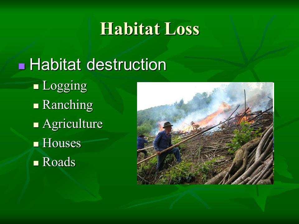 Habitat Loss Habitat destruction Habitat destruction Logging Logging Ranching Ranching Agriculture Agriculture Houses Houses Roads Roads