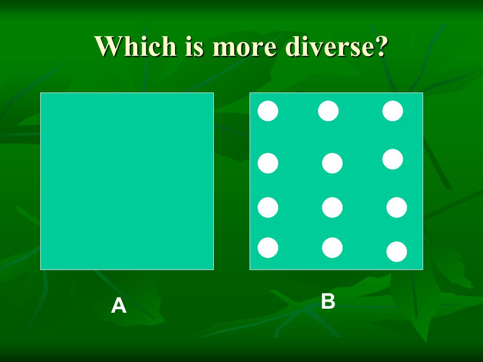 Which is more diverse? A B