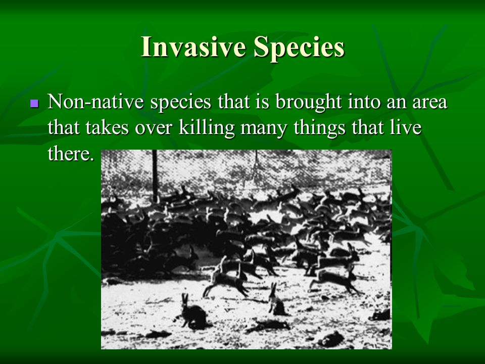 Invasive Species Non-native species that is brought into an area that takes over killing many things that live there.
