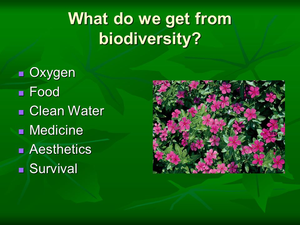 What do we get from biodiversity.