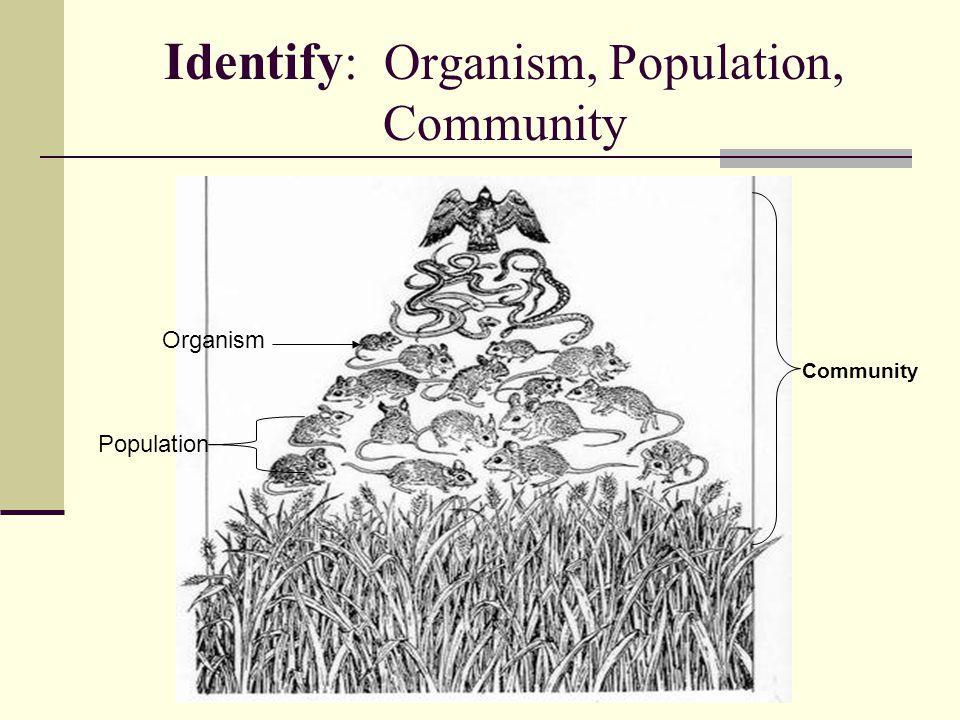 Identify : Organism, Population, Community Community Organism Population