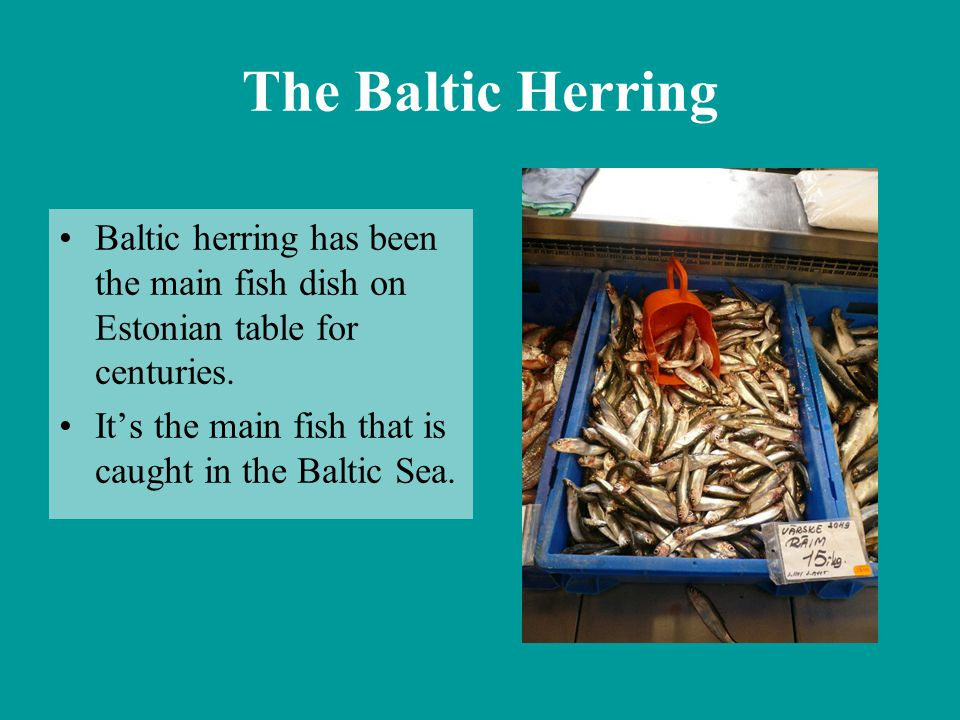 The Baltic Herring Baltic herring has been the main fish dish on Estonian table for centuries. It's the main fish that is caught in the Baltic Sea.