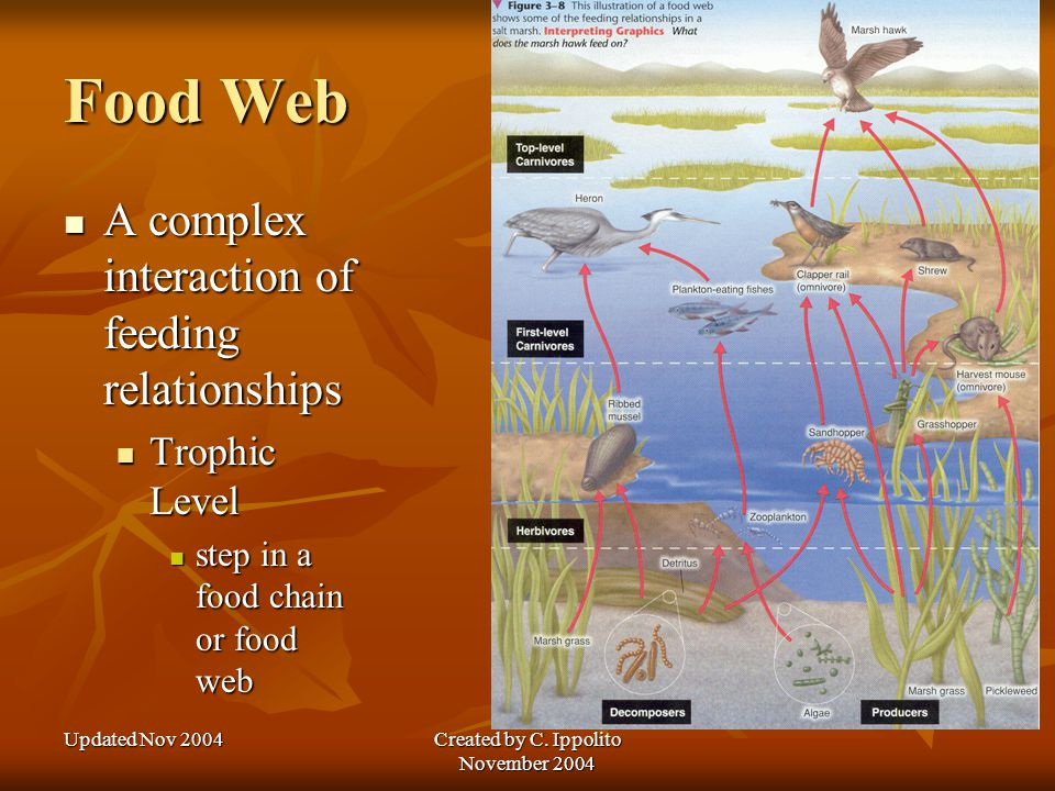 Updated Nov 2004Created by C. Ippolito November 2004 Feeding Relationships Energy flows in one direction in an ecosystem Energy flows in one direction