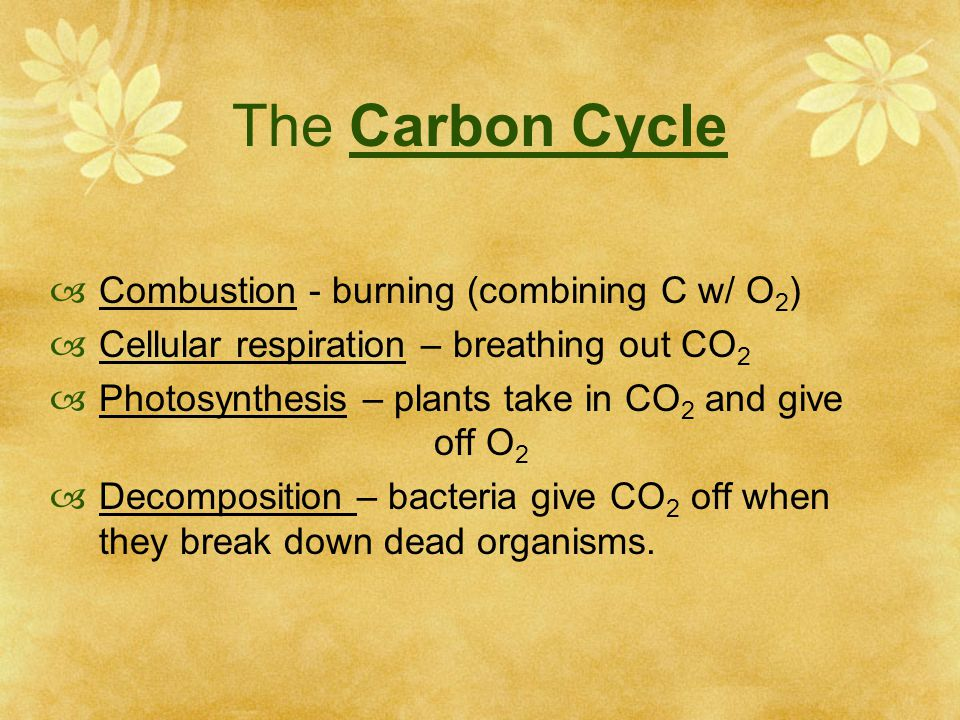 The Carbon Cycle  Combustion - burning (combining C w/ O 2 )  Cellular respiration – breathing out CO 2  Photosynthesis – plants take in CO 2 and give off O 2  Decomposition – bacteria give CO 2 off when they break down dead organisms.