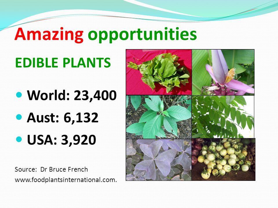 Amazing opportunities EDIBLE PLANTS World: 23,400 Aust: 6,132 USA: 3,920 Source: Dr Bruce French www.foodplantsinternational.com.