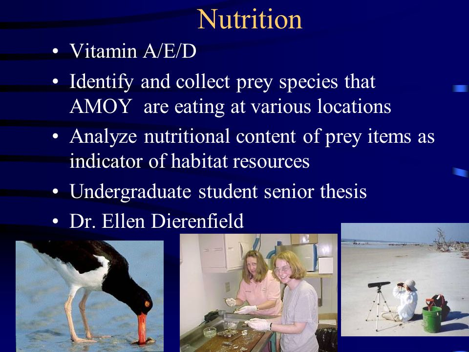 Nutrition Vitamin A/E/D Identify and collect prey species that AMOY are eating at various locations Analyze nutritional content of prey items as indicator of habitat resources Undergraduate student senior thesis Dr.