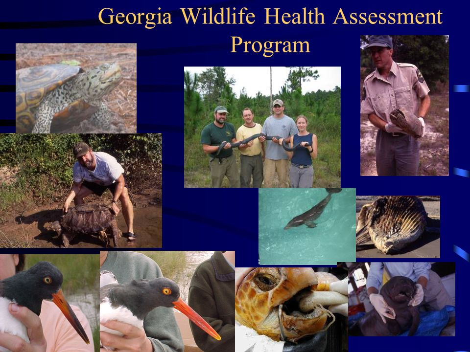 Georgia Wildlife Health Assessment Program