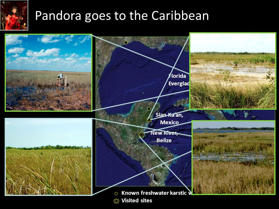 Pandora goes to the Caribbean  Exist throughout the world, particularly in coastal regions, on ancient carbonate platforms  Are particularly abundant in the Caribbean but not well studied Florida Everglades Black River Morass, Jamaica Sian Ka'an, Mexico New River, Belize Known freshwater karstic wetlands Visited sites