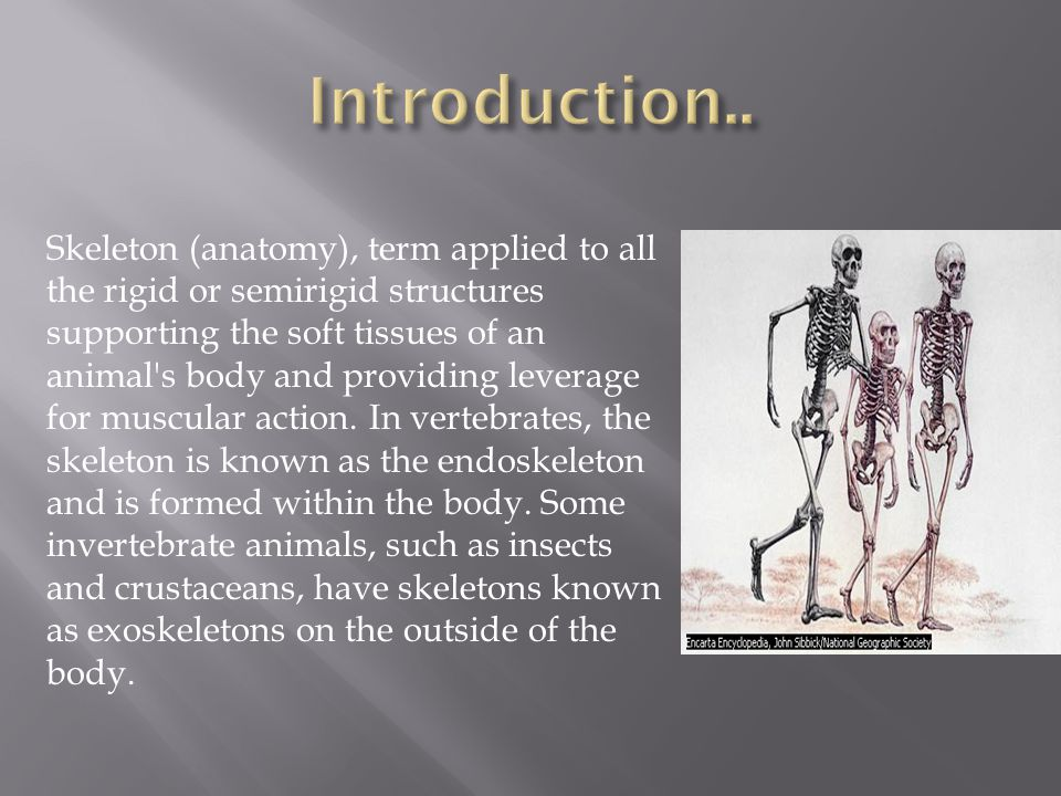 Skeleton (anatomy), term applied to all the rigid or semirigid structures supporting the soft tissues of an animal s body and providing leverage for muscular action.