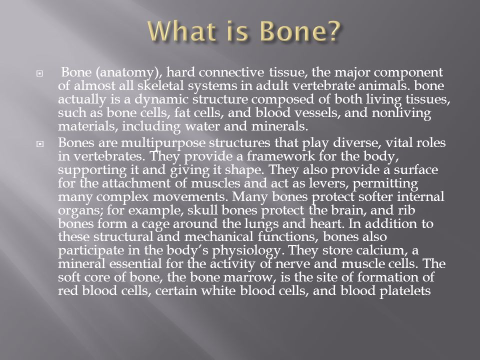  Bone (anatomy), hard connective tissue, the major component of almost all skeletal systems in adult vertebrate animals.