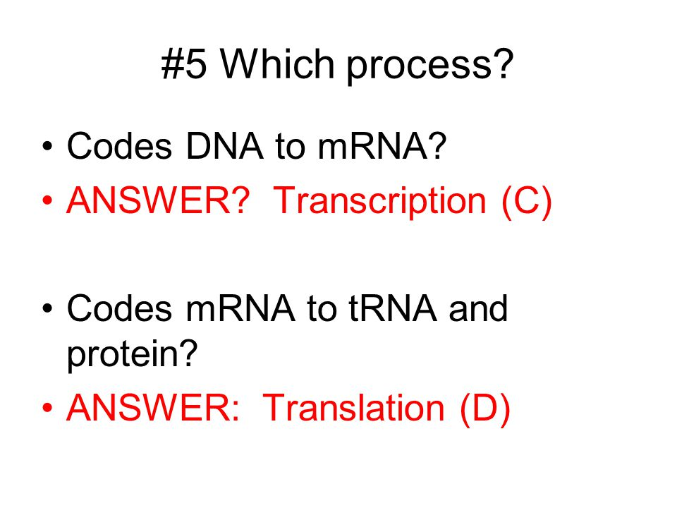 #5 Which process? Codes DNA to mRNA? ANSWER? Transcription (C) Codes mRNA to tRNA and protein? ANSWER: Translation (D)