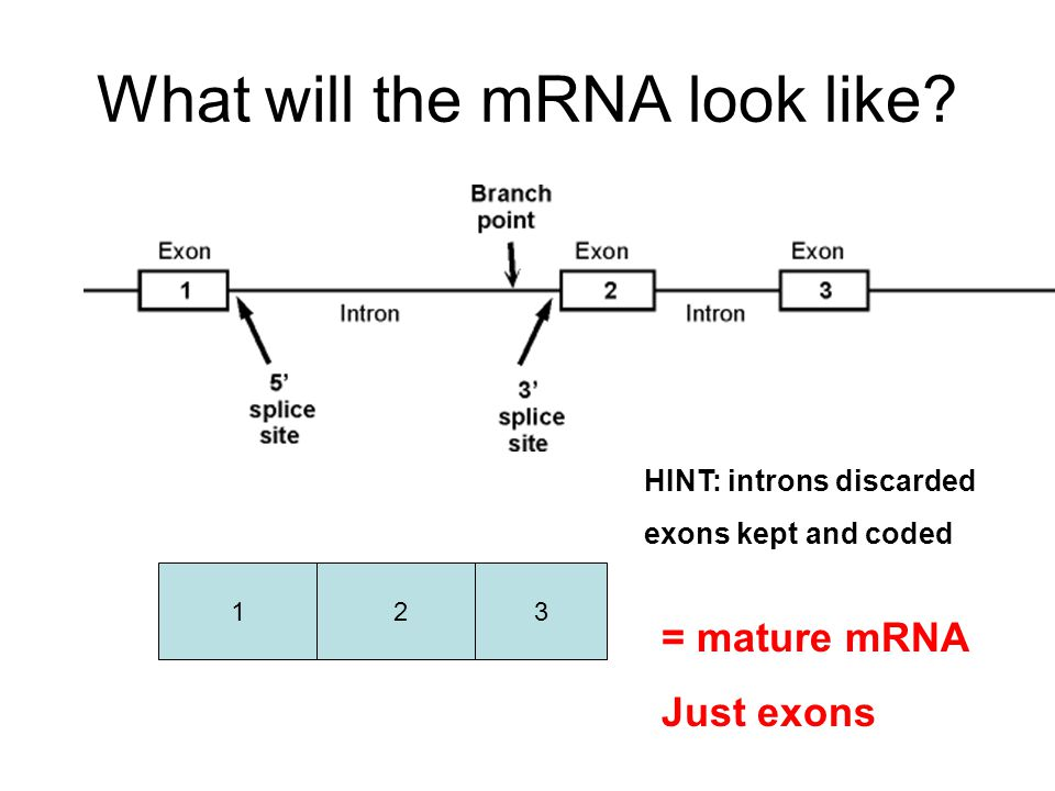 What will the mRNA look like.