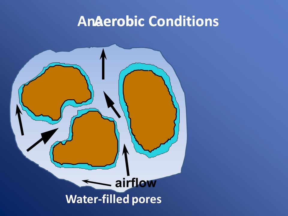 Anaerobic ConditionsAerobic Conditions airflow Water-filled pores