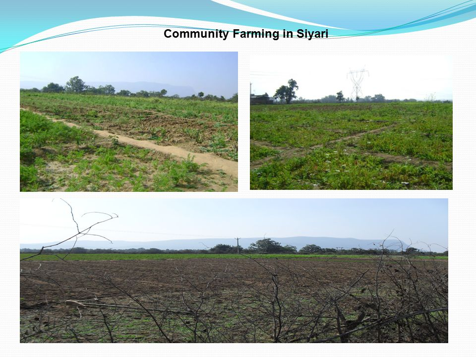 Community Farming in Siyari