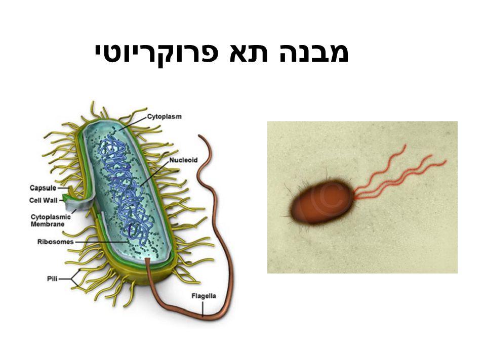 מבנה תא פרוקריוטי