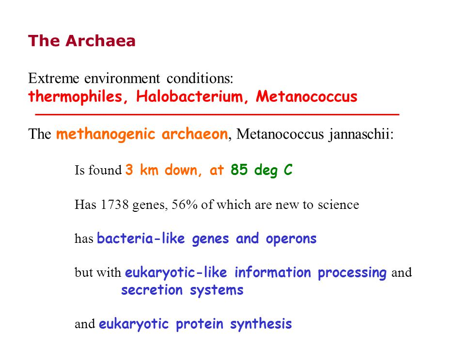 The Archaea Extreme environment conditions: thermophiles, Halobacterium, Metanococcus The methanogenic archaeon, Metanococcus jannaschii: Is found 3 km down, at 85 deg C Has 1738 genes, 56% of which are new to science has bacteria-like genes and operons but with eukaryotic-like information processing and secretion systems and eukaryotic protein synthesis