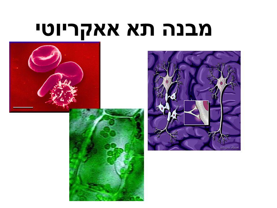 מבנה תא אאקריוטי