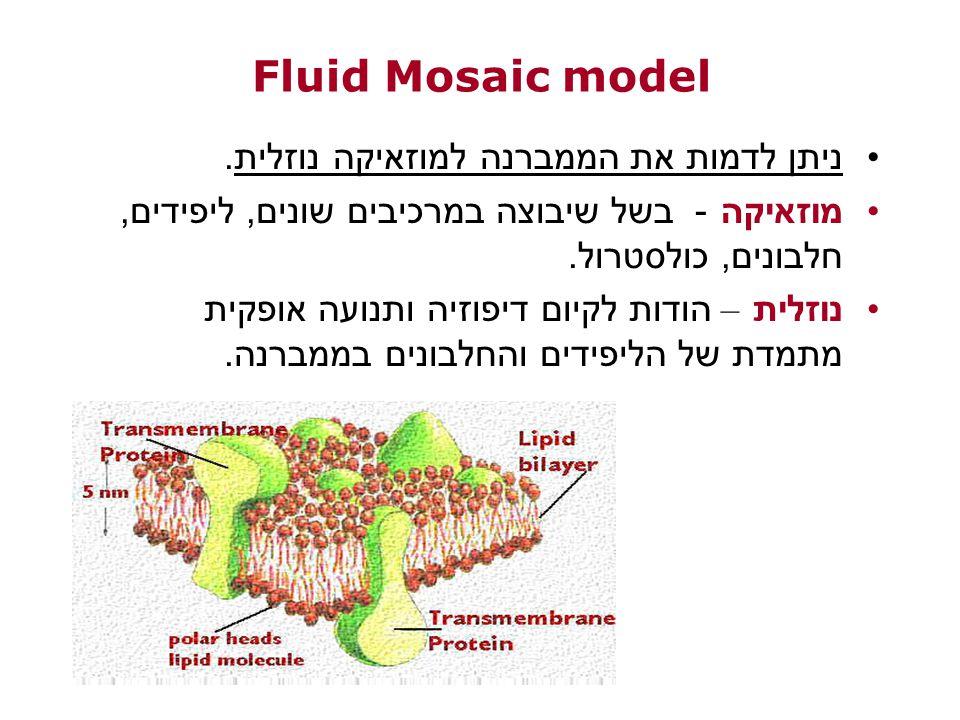 Fluid Mosaic model ניתן לדמות את הממברנה למוזאיקה נוזלית.