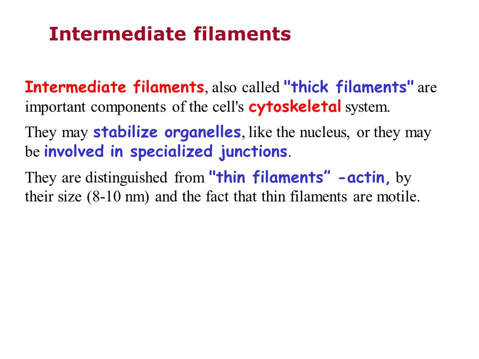 Intermediate filaments Intermediate filaments, also called thick filaments are important components of the cell s cytoskeletal system.