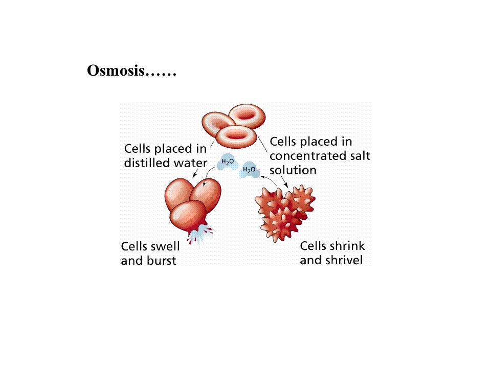 Osmosis ……