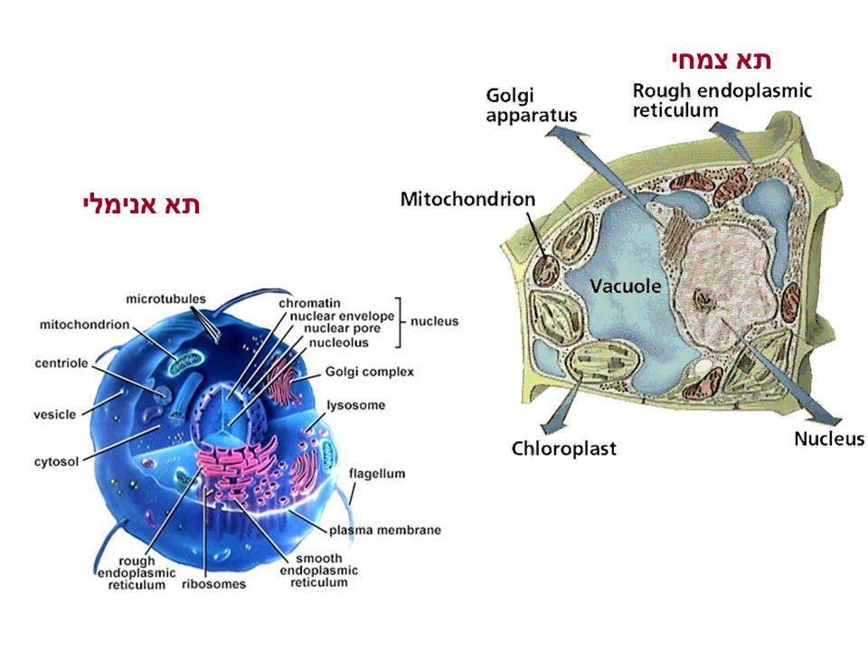 תא אנימלי תא צמחי