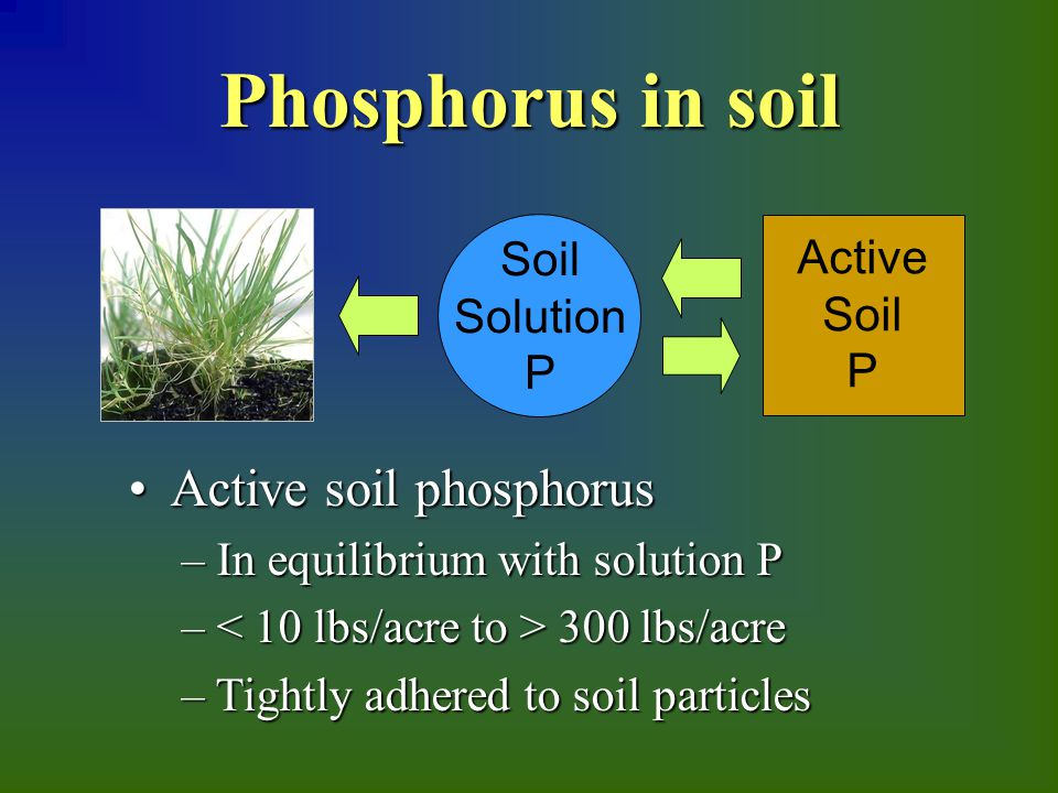 Active soil phosphorus Active soil phosphorus – In equilibrium with solution P – 300 lbs/acre – Tightly adhered to soil particles Active Soil P Soil Solution P Phosphorus in soil