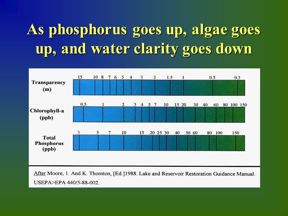 As phosphorus goes up, algae goes up, and water clarity goes down