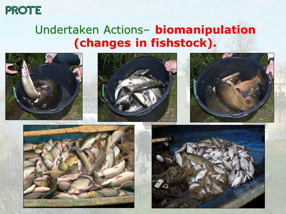 Undertaken Actions– biomanipulation (changes in fishstock).