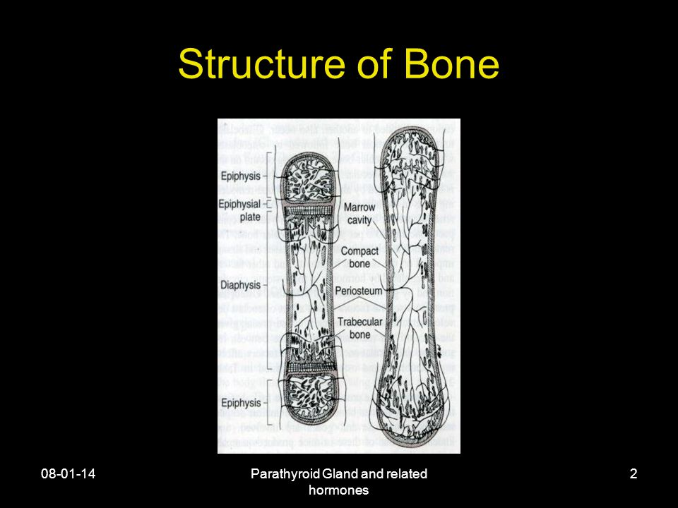 08-01-14Parathyroid Gland and related hormones 2 Structure of Bone