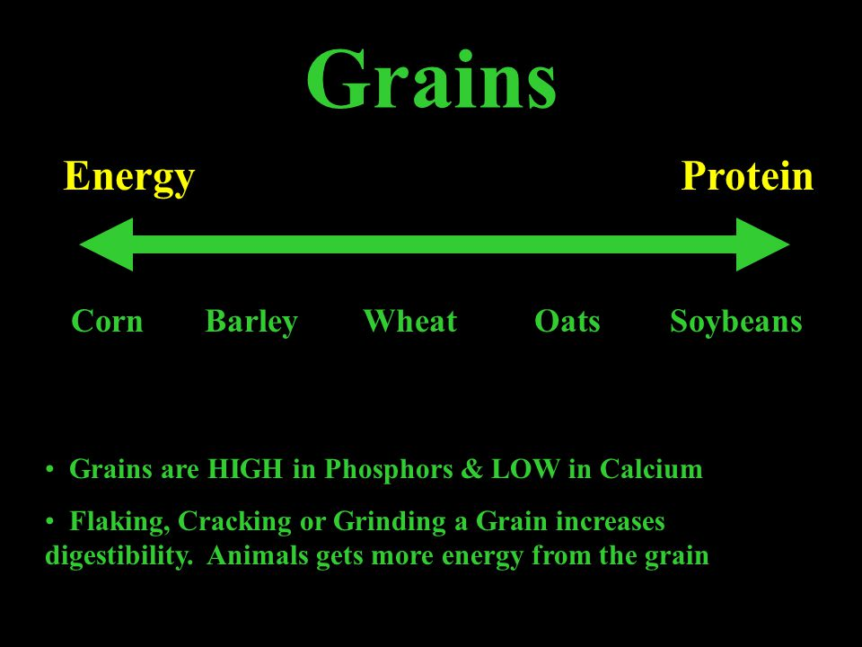 Corn Highest ENERGY Grain Lowest Protein Grain (8%) Used to fatten animals