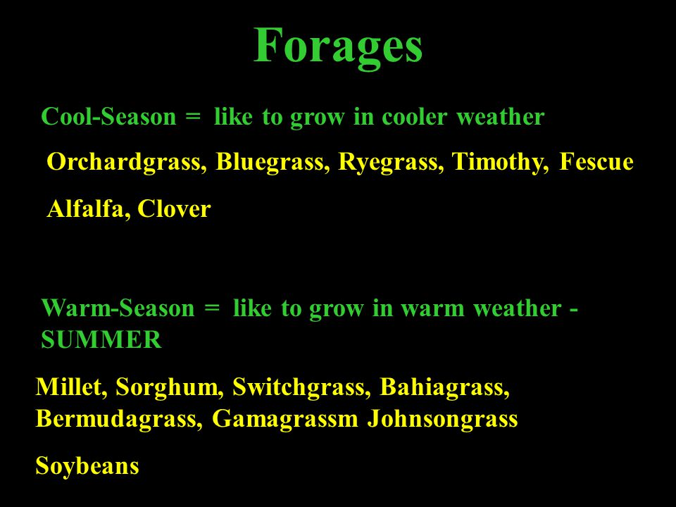 Forages Cool-Season = like to grow in cooler weather Warm-Season = like to grow in warm weather - SUMMER Millet, Sorghum, Switchgrass, Bahiagrass, Bermudagrass, Gamagrassm Johnsongrass Soybeans Orchardgrass, Bluegrass, Ryegrass, Timothy, Fescue Alfalfa, Clover