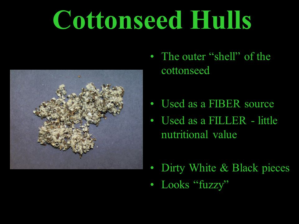 Cottonseed Hulls The outer shell of the cottonseed Used as a FIBER source Used as a FILLER - little nutritional value Dirty White & Black pieces Looks fuzzy