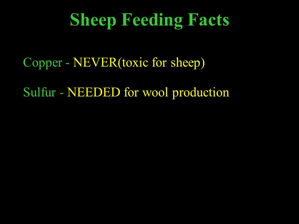 Sheep Feeding Facts Copper - NEVER(toxic for sheep) Sulfur - NEEDED for wool production