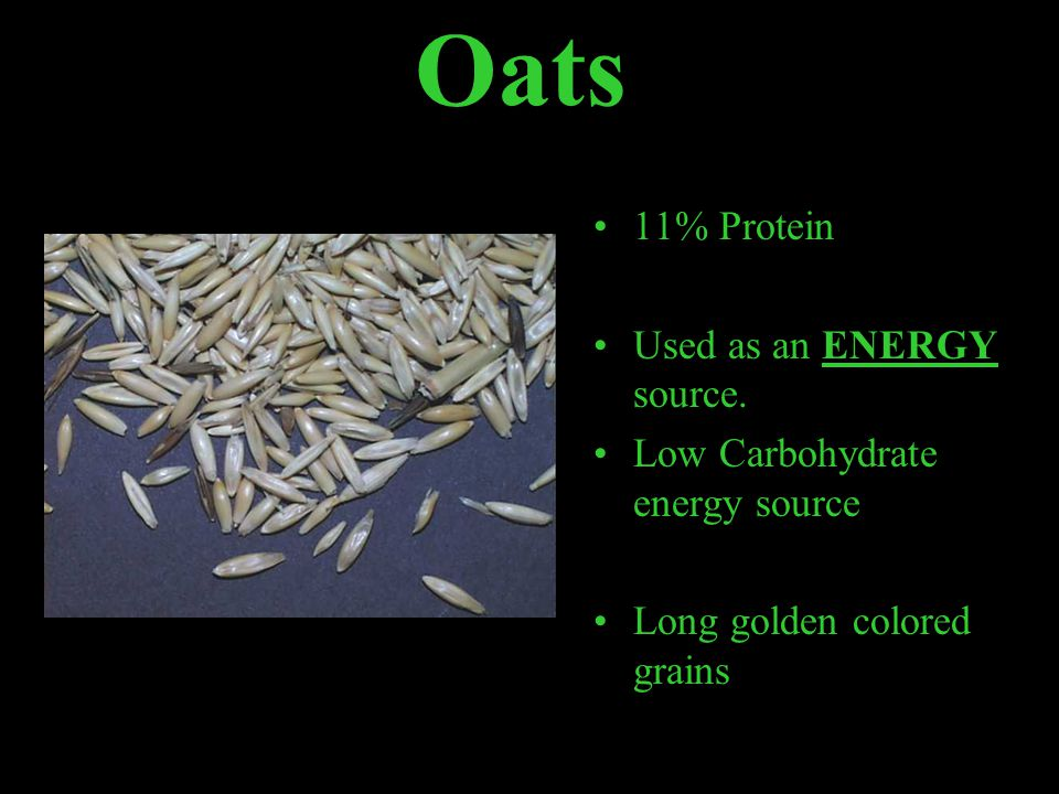Oats 11% Protein Used as an ENERGY source.