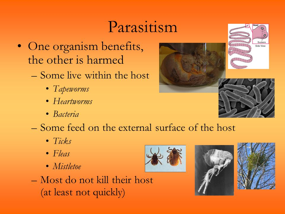 Parasitism One organism benefits, the other is harmed –Some live within the host Tapeworms Heartworms Bacteria –Some feed on the external surface of t