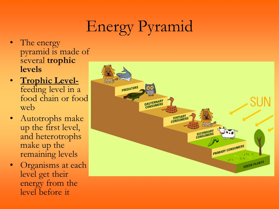 Energy Pyramid The energy pyramid is made of several trophic levels Trophic Level- feeding level in a food chain or food web Autotrophs make up the fi