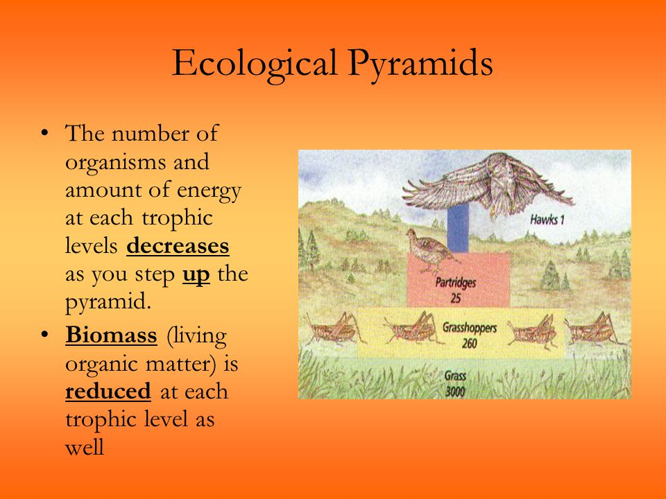 Ecological Pyramids The number of organisms and amount of energy at each trophic levels decreases as you step up the pyramid. Biomass (living organic